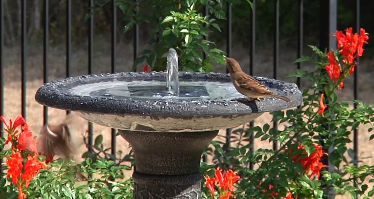 Solar Birdbath Fountain Reviews