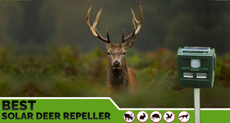 Solar Deer Repeller Reviews